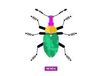 vine weevil