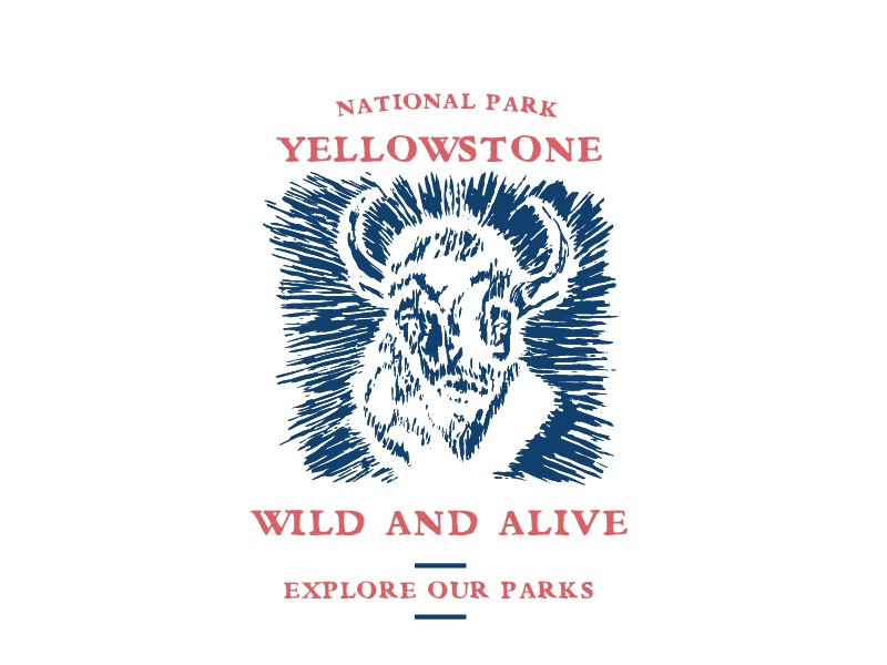 wild and alive printmaking bison national parks yellowstone