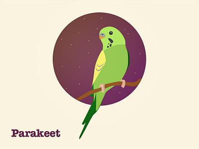 Hackday Parakeet parakeet bird