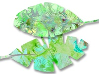 Tropical leaf with watercolor