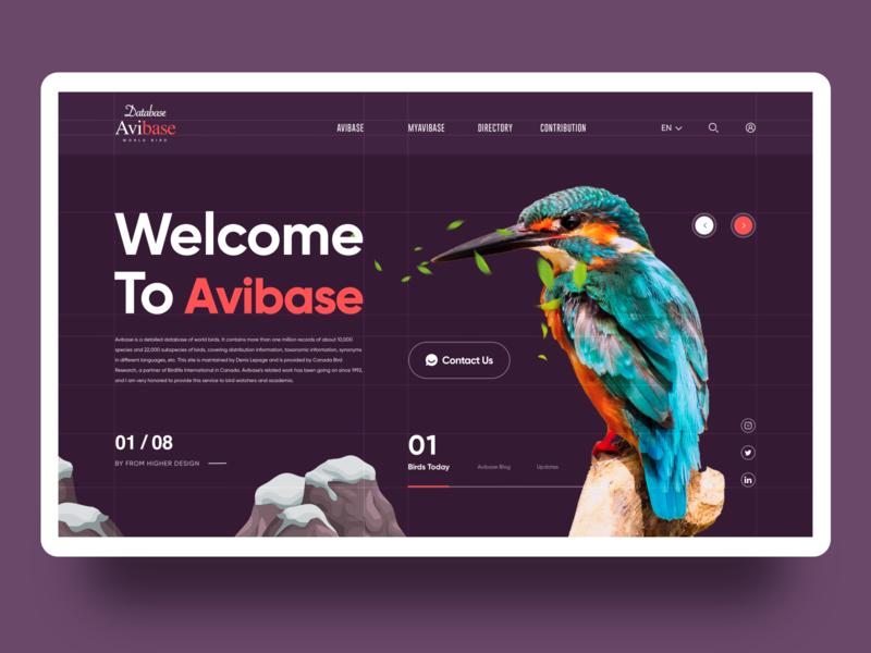 Avibase-World Bird Database birds natural illustration uiux web design 应用界面设计