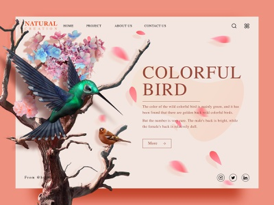 Natural creation 03 bird web设计 natural ui