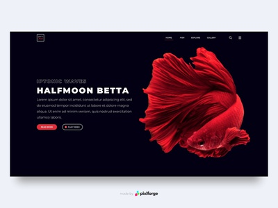 Halfmoon Betta black red halfmoonbetta fish branding website webdesign web uiux pixlforge interface design interface design