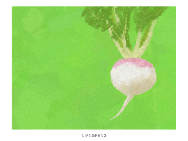 RADISH radish fruit illustration