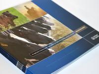 Boehringer Ingelheim Prevention Works Brochure