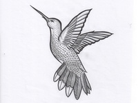 Hummingbird 🐥