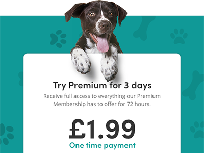 Subscription for membership on dog website pet dog design subscribe membership ui web design