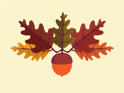 Morning Fifteen 2.0 seed plant growth texture nature oak harvest illustration autumn leaves fall acorn