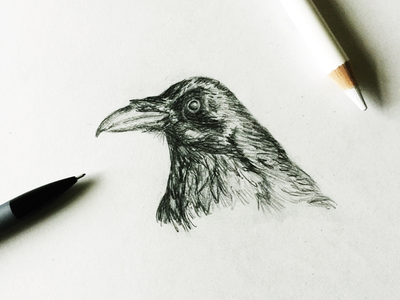 Inktober-Day 7 animal mewithoutyou crow bird graphite sketch illustration inktober