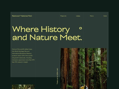 Redwood block web design modern mood forest natural editorial whitespace uxui ui design website design national park green minimal minimalist layout grid typogaphy nature