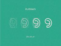 """Platanus """"9"""""""