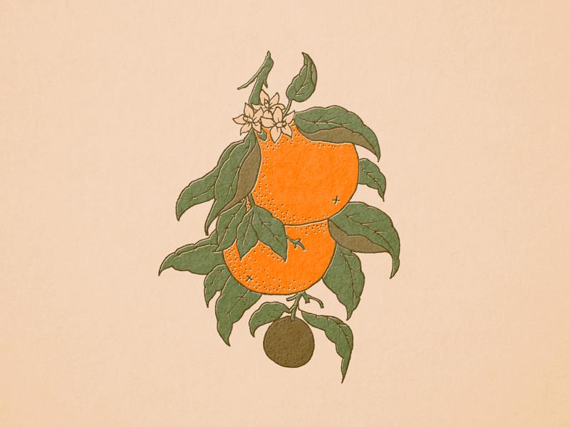 Botanical Oranges floral botanical nature illustration oranges orange