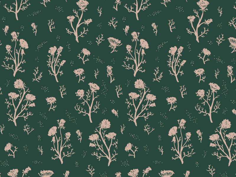 Queen Anne's Lace design illustration nature wildflowers queen annes lace pattern floral