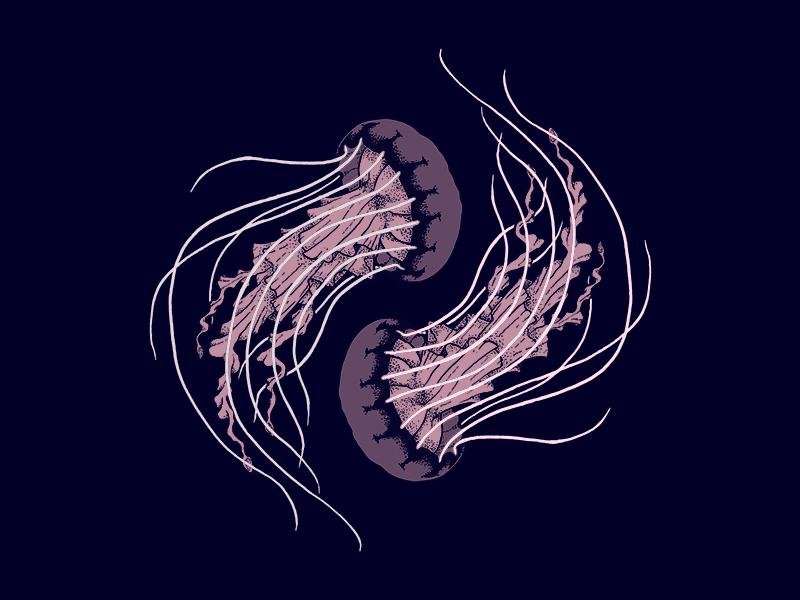 Jellyfish design sea creatures nature illustration pattern jellyfish