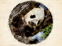 Giant Panda_Digital Art