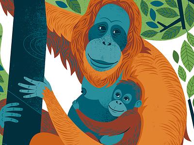ORANGUTANS!!!! orangutan animal illustration monkey