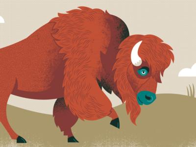 Where the buffalo roam animal buffalo