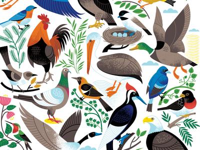 Birds of a Feather animal art illustration audubon scientific surface pattern surface design birds