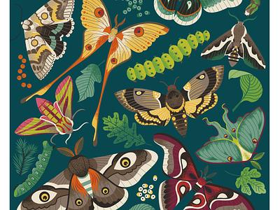 Pretty/Creepy vintage illustration scientific botanical insect moths