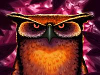 Owl owl bird illustration painting digital painting