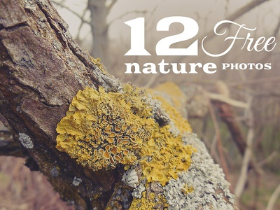 12 Free Nature Photos v.2 free freebie download dealjumbo photo image wallpaper background nature abstract retro vintage