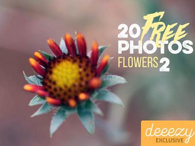 20 FREE Flower Photos 2 flower photography flower photo flower flowers free backgrounds free photos photography photos backgrounds