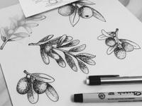 Olives sketch