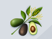Avocados drawing digital graphic food marketing fruits avocado illustration design