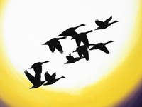 Bird art , geese flying over new moon