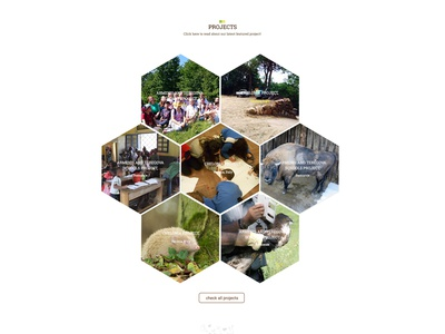 Green Teen Team web deisgn design branding illustration ux ui design