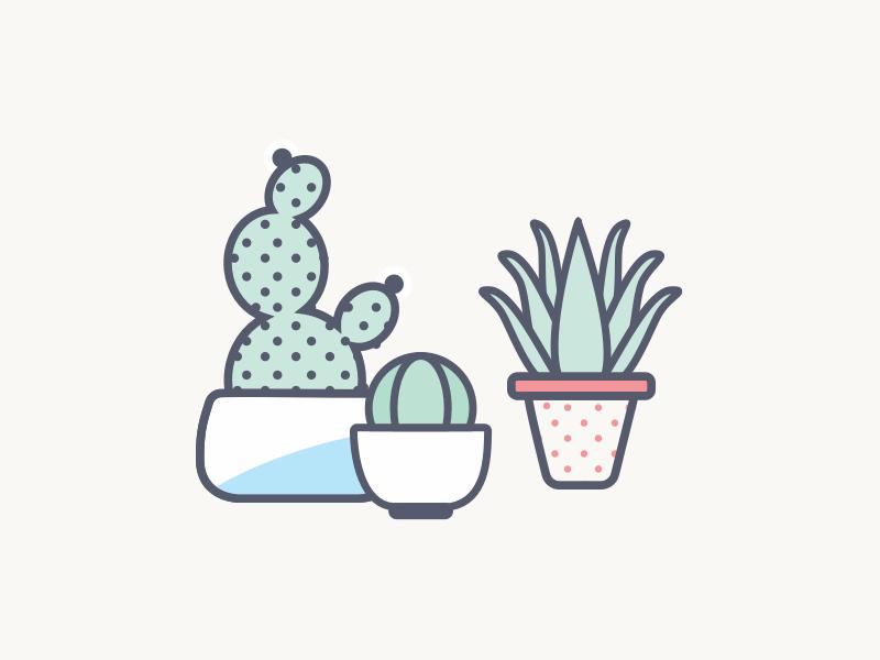 Diversity diversity pot planter aloe vera cactus plants