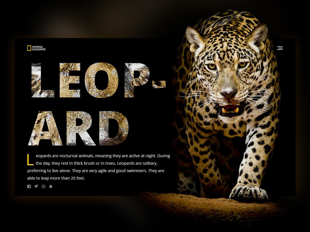 Daily UI - Leopard national geographic hero banner hero image webdesign design dailyui