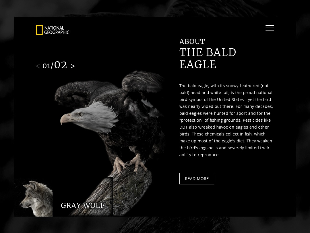 Daily UI - Bald Eagle national geographic eagle nature dailyui