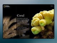 Daily UI - Coral