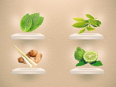 Tea Collection tea pepermint green tea earl grey display shop drink light shelves shelf menu
