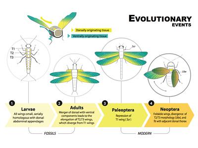 Artboard evolution science illustration