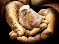 Berkutchi hands