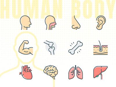 Human body, anatomy icon heart nose organ human human body brain outline icons icon