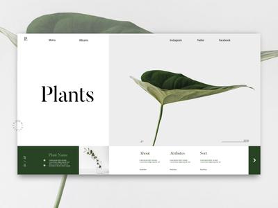 Plant store web