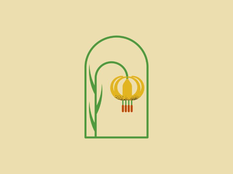 Lilium Bosniacum ( Bosnian Lily ) bosnia lily branding mark logo vectorart artist design illustrator graphicdesign digitalart digitaldesign vector illustration