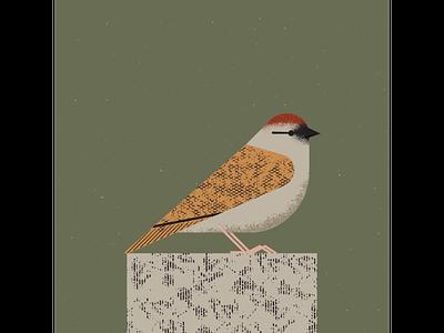 Sparrow sparrow art vintage retro vectorart artist design illustrator graphicdesign digitalart digitaldesign vector illustration