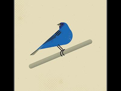Indigo Bunting indigo bunting birds bird vintage vectorart artist design illustrator graphicdesign digitalart digitaldesign vector illustration
