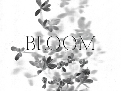 bloom rough