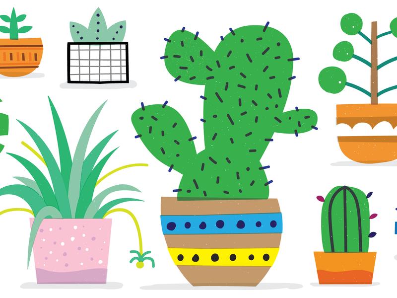 Plants! monstera planters green cactus plants