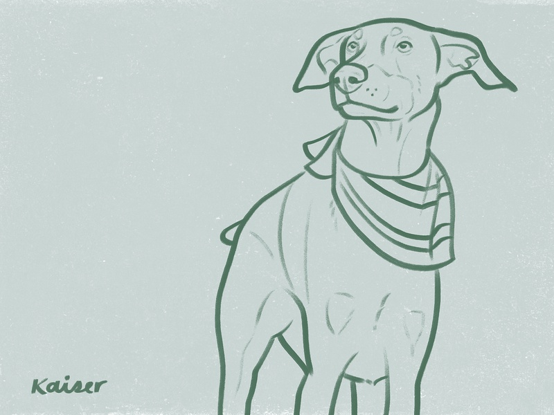 Kaiser doberman dog drawing sketch illustration
