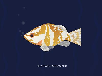 Nassau Grouper explore fish illustration bermuda
