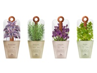 Packaging design: sachets with herbs