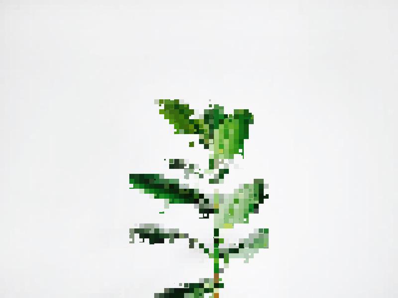 Pixelated photos generativeart creativecoding p5js processing illustration ui graphicdesign graphic design