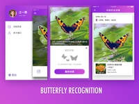 Butterfly Recognition