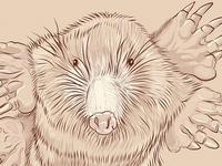 Mole(2K15)